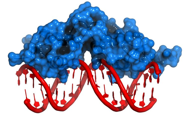 DNA remodeling complex study could impact breast cancer treatment development