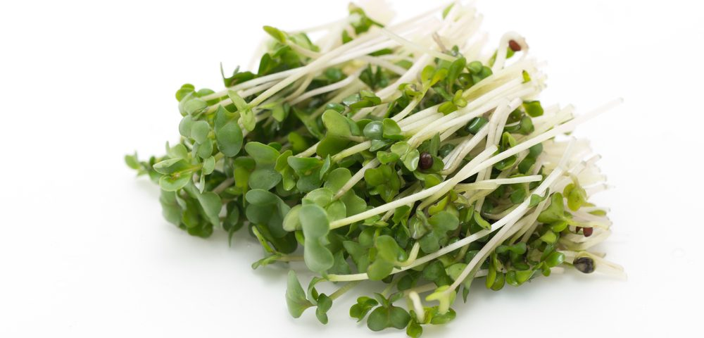 Eating Broccoli Sprouts While Pregnant May Help Prevent Breast Cancer in Child Decades Later, Mouse Study Shows