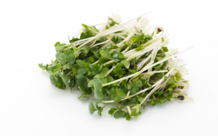 broccoli sprouts, pregnancy